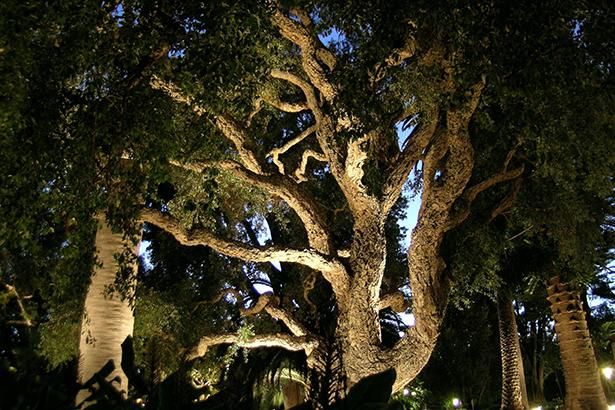 eclairage-arbre
